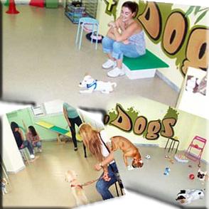 Εκπαιδεύοντας σκυλάκια