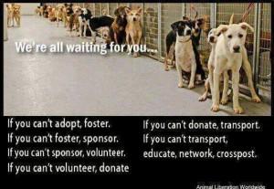 adopt rules1